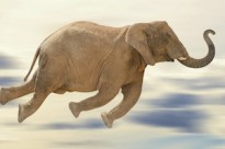 Elephant Hadoop